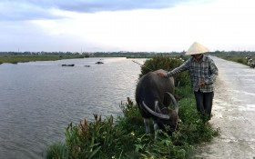 Hoi-An-farmer-and-buffalo.jpg